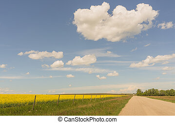 Country Road and a Canola Field