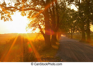 country road and rays of the setting sun, sunset in the field
