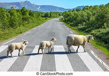 Country road crossing