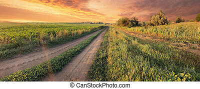 Country road in a field under dramatic sky
