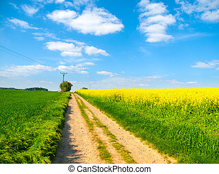 Country road in a yellow field of rapeseed