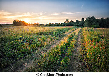 Country road in field with dense grass at sunset