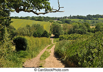 Country Road in Kent