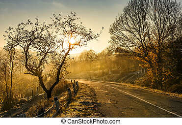 country road in morning fog with naked trees. beautiful...