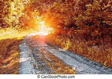 Country road in the autumn forest to the sun