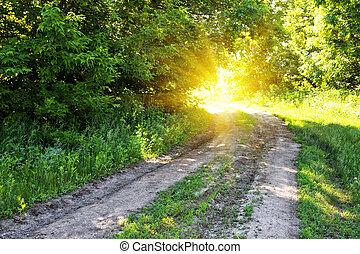 Country road in the forest to the sun