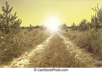 Country road in the sunlight