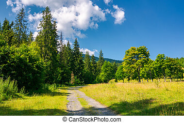 country road in to the deep spruce forest lovely nature...