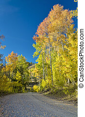 Country road leads through fall aspens