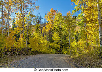 Country road leads through yellow aspens