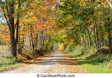 Country road on an Autumn day