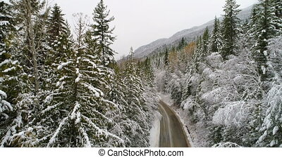 Country road passing through pine forest during winter 4k -...