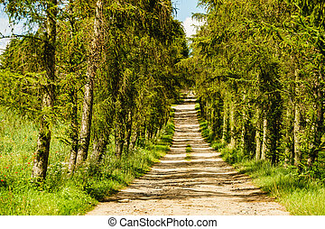 Country road path with green trees.
