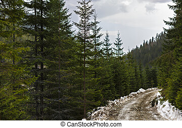 Country road through fir forest on the mountains in wintertime