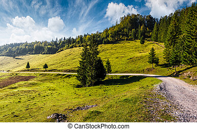 country road through forested hillside. beautiful nature...
