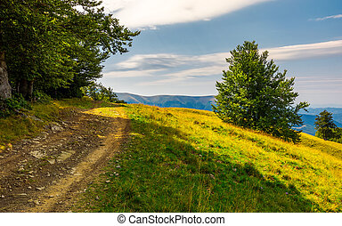 country road through forested hillside. lovely summer...