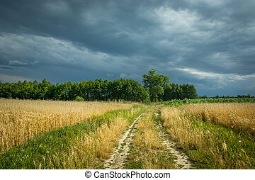 Country road through grain, horizon and rainy clouds