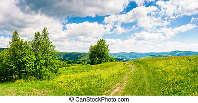 country road through grassy meadow on hillside. beautiful...