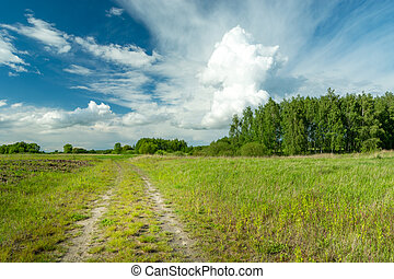Country road through meadows, trees and big white cloud on the sky