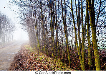 Country road through rich deciduous forest