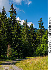 country road through spruce forest. lovely nature scenery on...