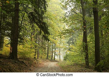 Country road through the woods