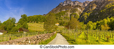 Country road through vineyards to the mountains
