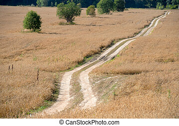 Country road - track through the wheat fields