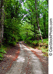 Country Road - View of a country road covered with green ...