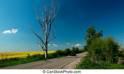 Country Road with Dried Tree along Rapeseed Field - Country...