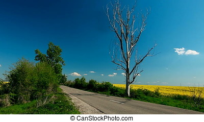 Country Road with Dried Tree along Rapeseed Field