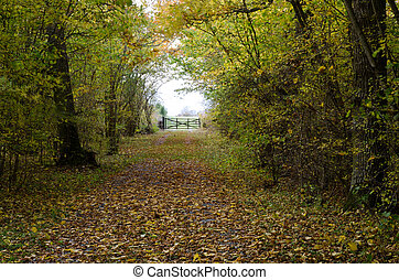 Country road with gate and autumn leaves