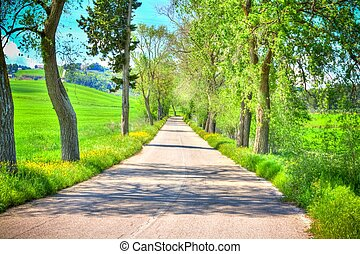 country road with trees along