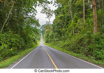 Country road with trees at nation park