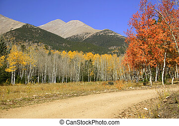 Back country roads wind through the Shavano wilderness area through aspen trees and past Mt. Shavano.