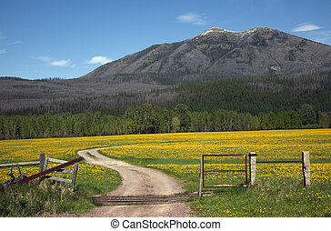 Country Roads Montana Countryside Yellow Flower Farm in front of Mountain Near Glacier National Park Montana
