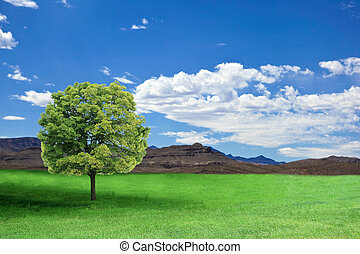 Country Scene - Country scene in summer time with alone tree
