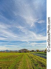 Country scene in autumn