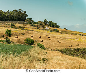 country scenery of Mdina