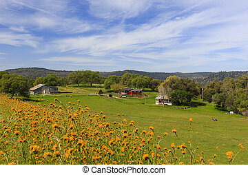 Country side of California, with beautiful yellow flower as foreground