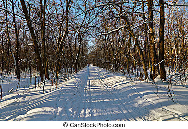 Country skiing in the winter forest