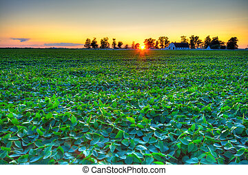 Beautiful sunset at a farm in Central Indiana. HDR image