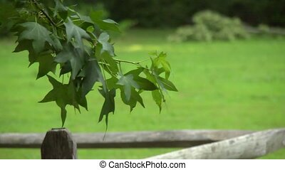 Country tree branch