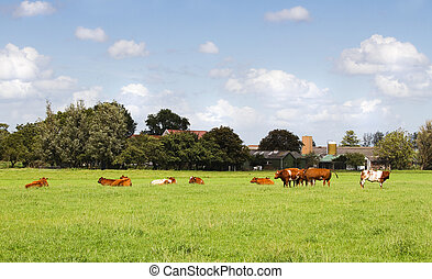 Countrylandscape in summer with cows