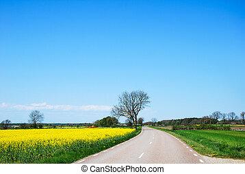 countryroad, springtime