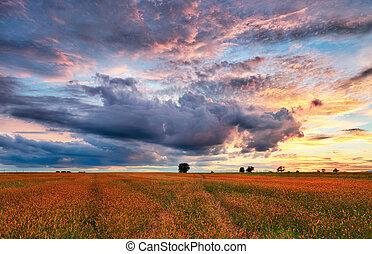 countryside., 목초지, 조경술을 써서 녹화하다, 일몰