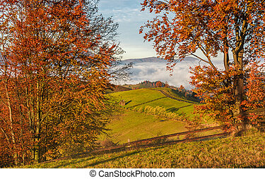 countryside area at foggy morning in autumn. lovely...