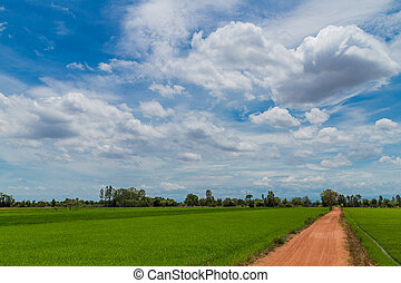countryside farm track running through rice fields on the thaila