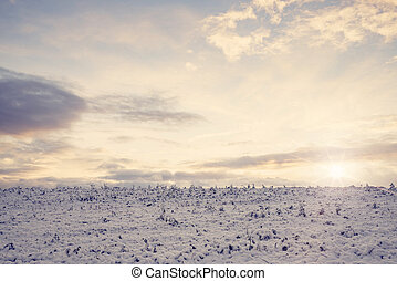 Countryside field with frozen crops in the winter
