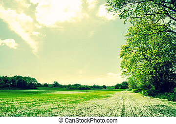 Countryside field with green crops